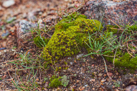 Bright green moss and grass among granite, brown stones, outdoors, soil plant, flora in nature. Close-up photo. Stock Photo