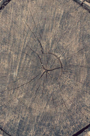 Background from sawn stump, old cracked weathered tree, wood grain, atmospheric impact, outdoors, vertical photo, close-up.