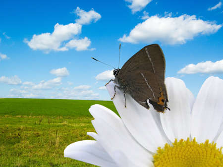 The butterfly and flower on white background