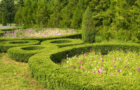 The flowerbed in garden. photo