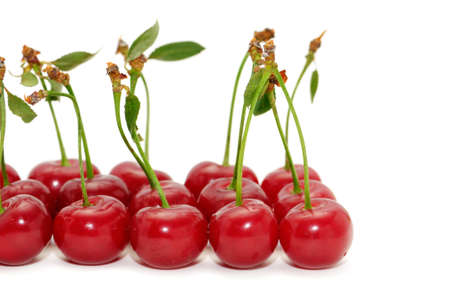 cherries isolated on a white background                                     photo
