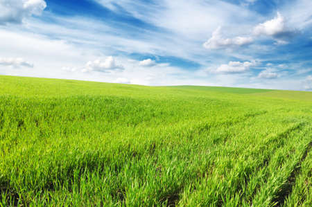meadow covered by a grass Stock Photo - 6968549