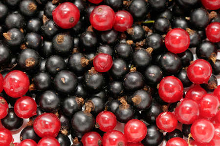 bacca: red currant and  black currant
