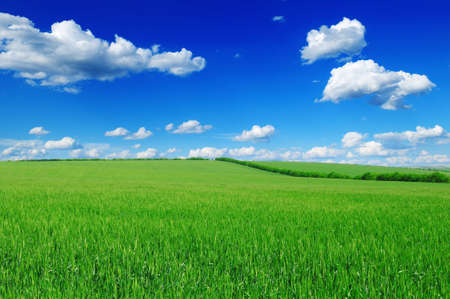 field and blue sky photo