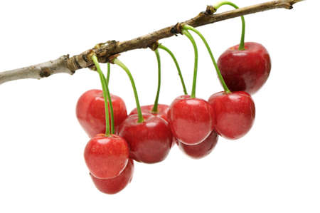cherries isolated: twig sweet cherries isolated on a white