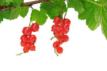 bacca: red currant isolated on a white background                                     Stock Photo
