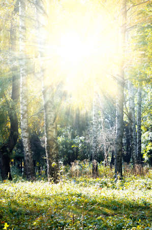 autumn wood illuminated sun                                     photo
