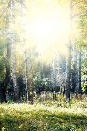 autumn wood illuminated sun