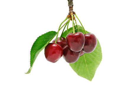 sweet cherries isolated on a white background Stock Photo - 8052587