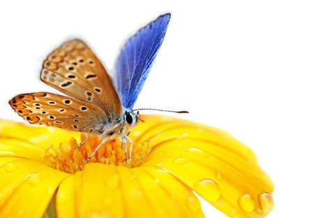 farfalla sul fiore isolato su sfondo bianco