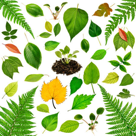 Collection of leaves isolated on white background.