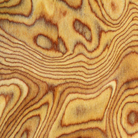 bark background: Wooden texture