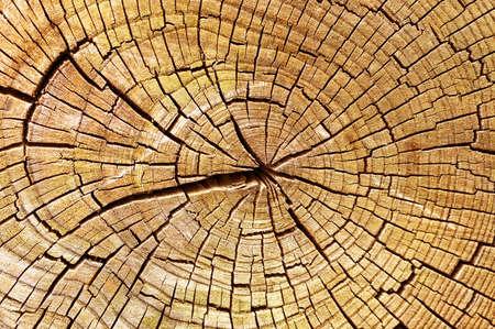 Wooden texture                                     Stock Photo - 9242352