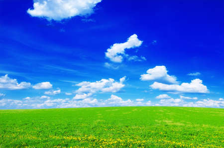 wheat fields: spring meadow and blue sky                                     Stock Photo
