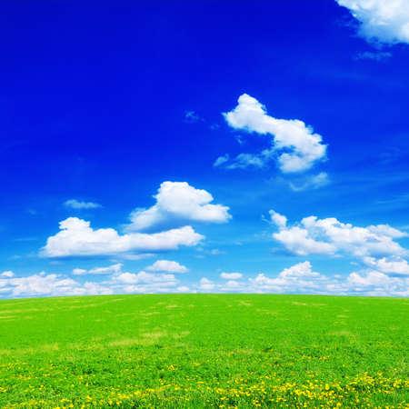 flower fields: dandelion field and sky                                     Stock Photo