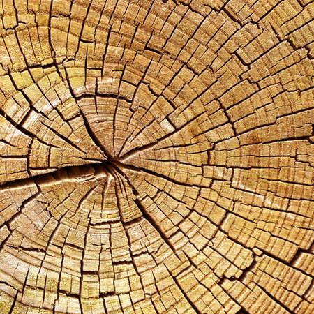 chobot: Dřevěné textury