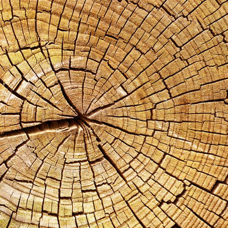 timber cutting: Wooden texture