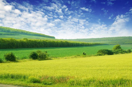 farming village: Green spring meadow and the beautiful blue sky