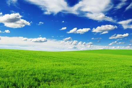 herbe ciel: prairie et le beau ciel bleu Banque d'images