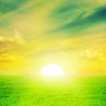 sol radiante: Hermoso atardecer en un campo de primavera.
