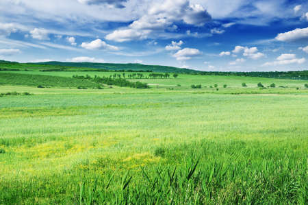 Field, mountains and blue sky Stock Photo - 10846902