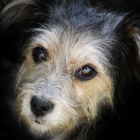 look hungry stray dog Stock Photo