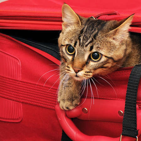 animal pussy: kitten in a suitcase
