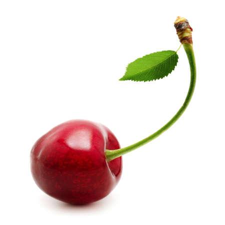 arbol de cerezo: cerezas aisladas sobre un fondo blanco