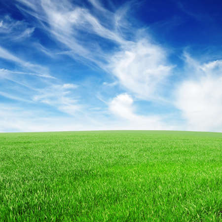 grass background: field and the beautiful blue sky