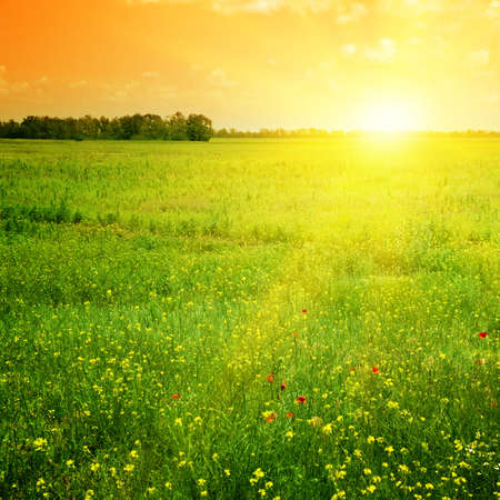 sunshine background: Beautiful sunset on a spring field