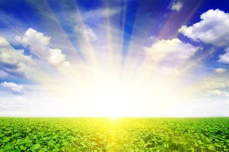 向日葵場和美麗的日出 版權商用圖片
