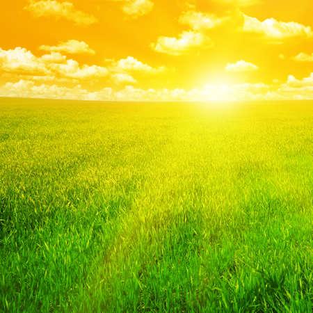 sunshine: campo verde y hermosa puesta de sol