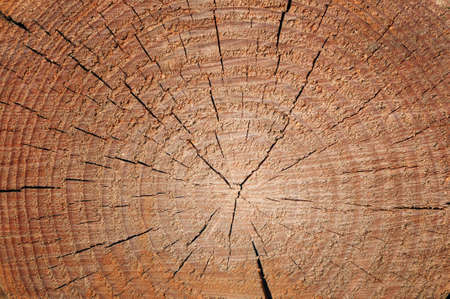 Wooden texture background Stock Photo - 12210751