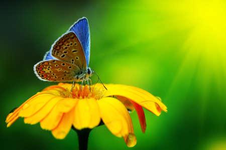Blue butterfly sunlit                                     Foto de archivo