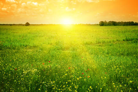 Beautiful sunset on a spring field Stock Photo - 12740778