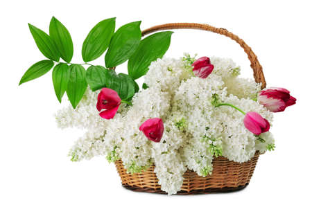 Lilacs in a basket isolated on a white background                                   photo