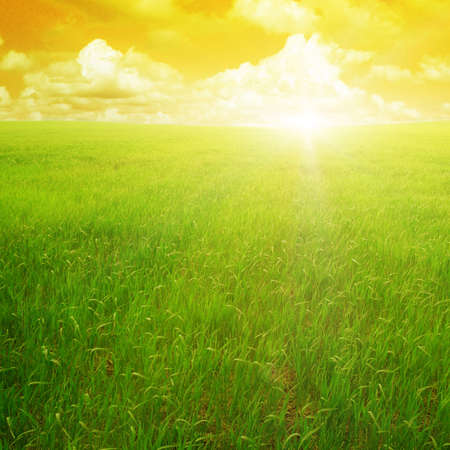 sunset on a spring field                                     Stock Photo - 12928753