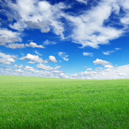 green field and sky Stock Photo - 12928754