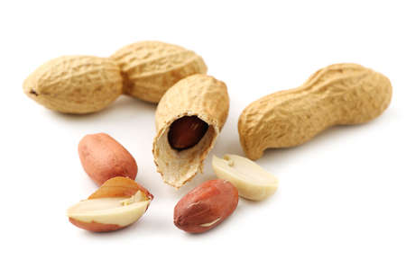 groundnut isolated on white background                                    photo