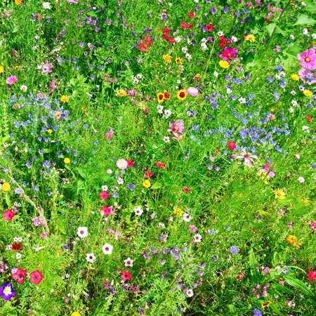wild flowers background                                     photo