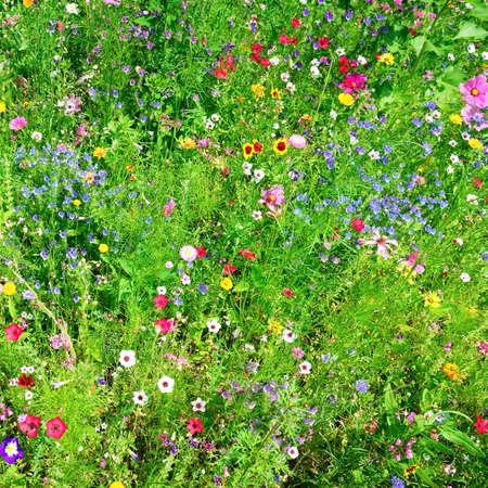 wild flowers background                                     photo