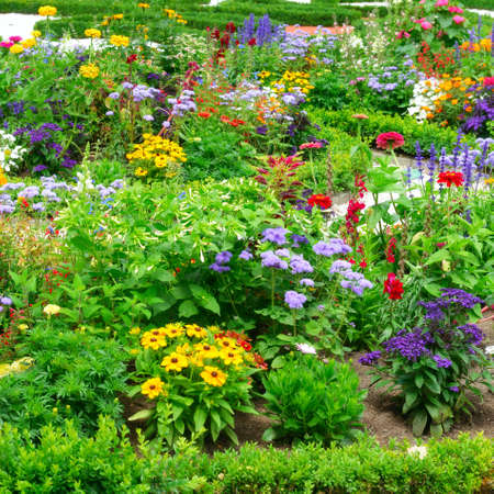 flower bed: Blossoming flowerbeds in the park