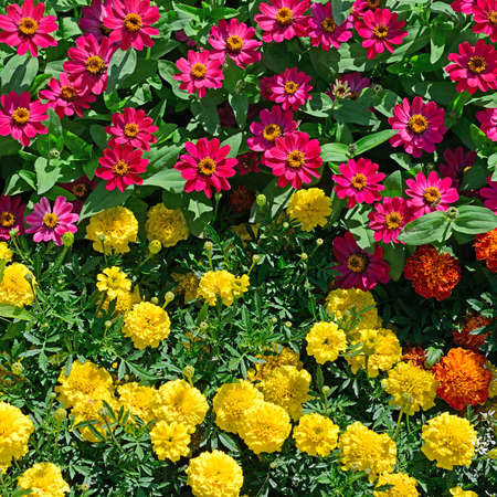Blossoming flowerbeds in the park Stock Photo - 15282983