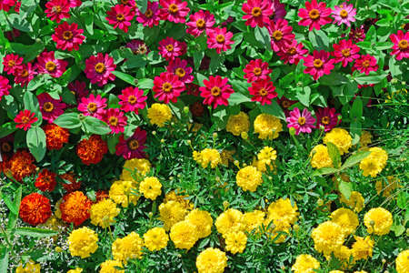 Blossoming flowerbeds in the park Stock Photo - 16159461
