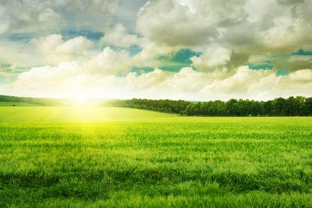 nature landscape: sunset on spring field