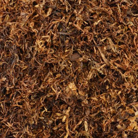 tobacco plant: dried smoking tobacco close-up macro view                                     Stock Photo
