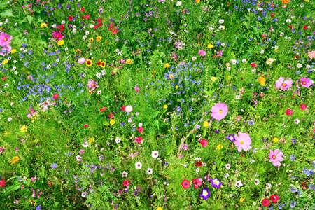 wild flowers Stock Photo - 18087111