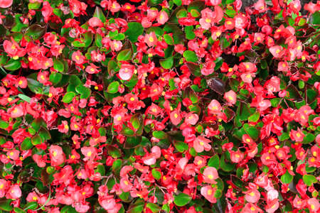 flowerbeds: Blossoming flowerbeds background                            Stock Photo