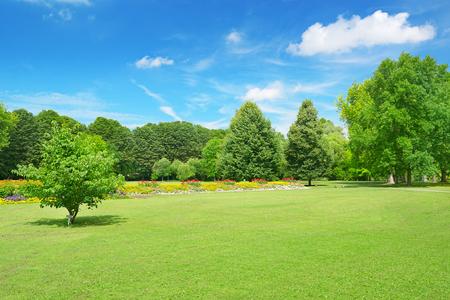 公園の美しい牧草地