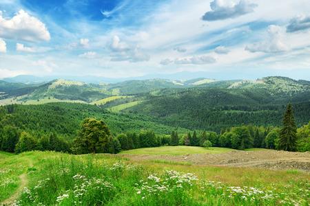 Schöne Berge bedeckt Bäume Standard-Bild - 26071304